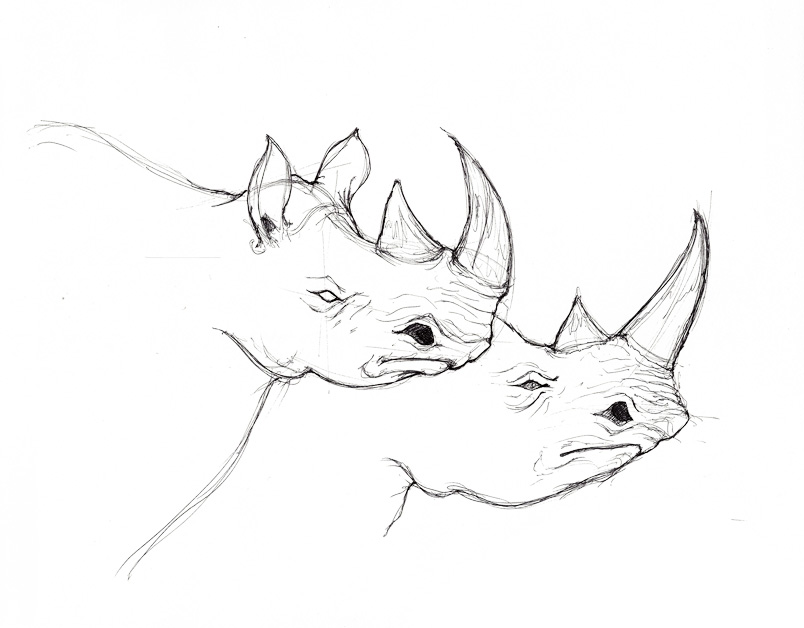 Line Drawing Rhino : Rhinoceros face drawing imgkid the image kid