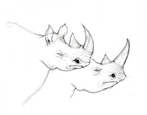 dan-15-min-rhino2