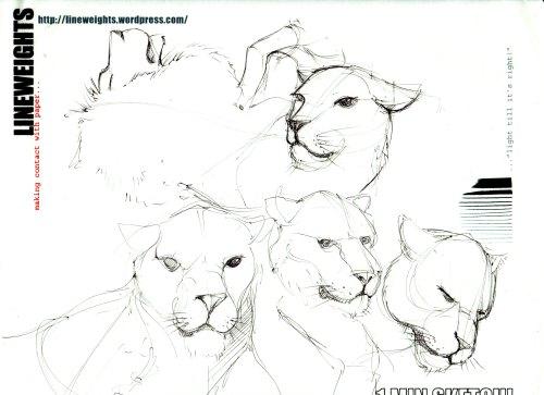 Lions-web